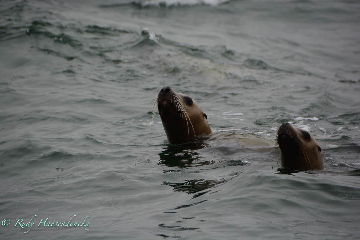 Tofino op zee en in delucht